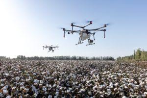 Les drones ne piquent pas mais ils ne font pas de miel